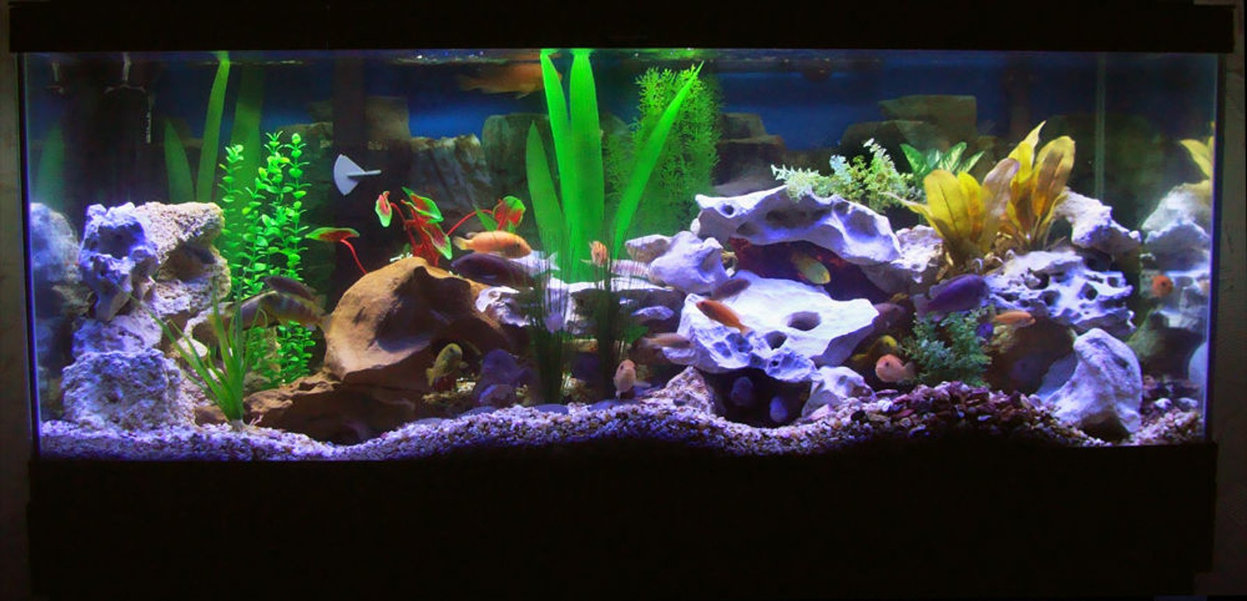 75 gallons freshwater fish tank (mostly fish and non-living decorations) - Updated Tank Photo, with Eheim 2028 Pro II.
