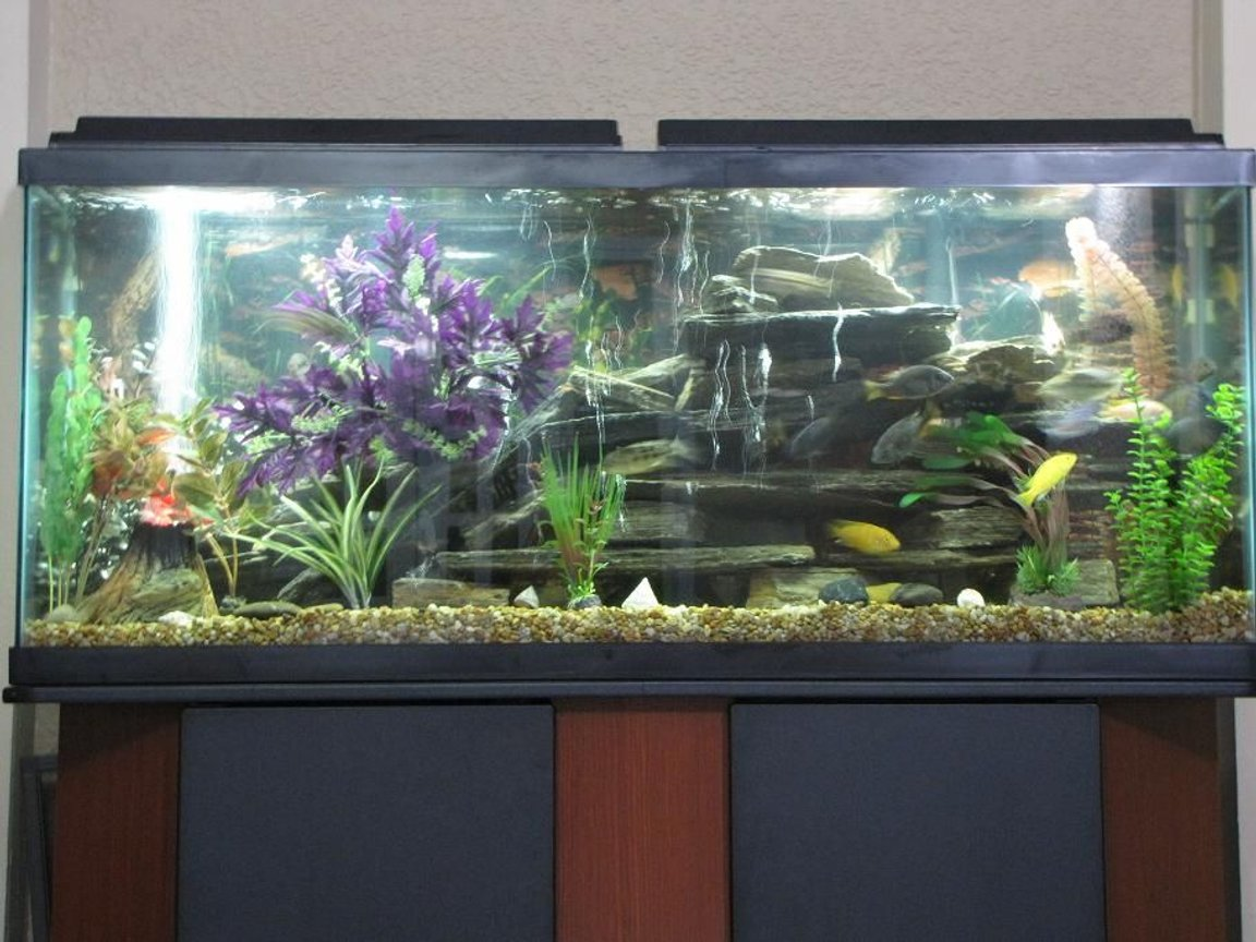 55 gallons freshwater fish tank (mostly fish and non-living decorations) - African cichlids fish, tank is 55g and decoration is rock, artificial plant and 1 volcano.