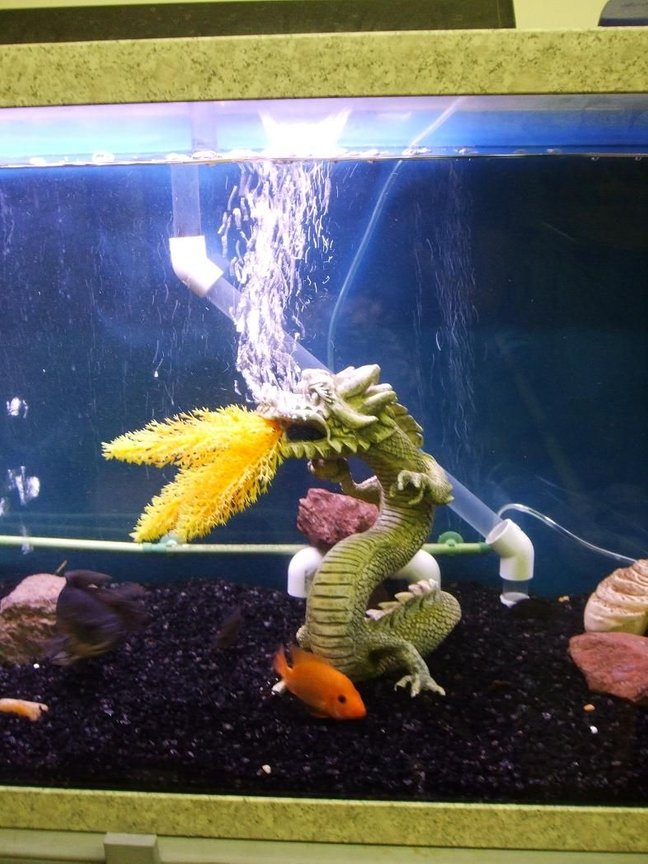 125 gallons freshwater fish tank (mostly fish and non-living decorations) - My fire breathing dragon.