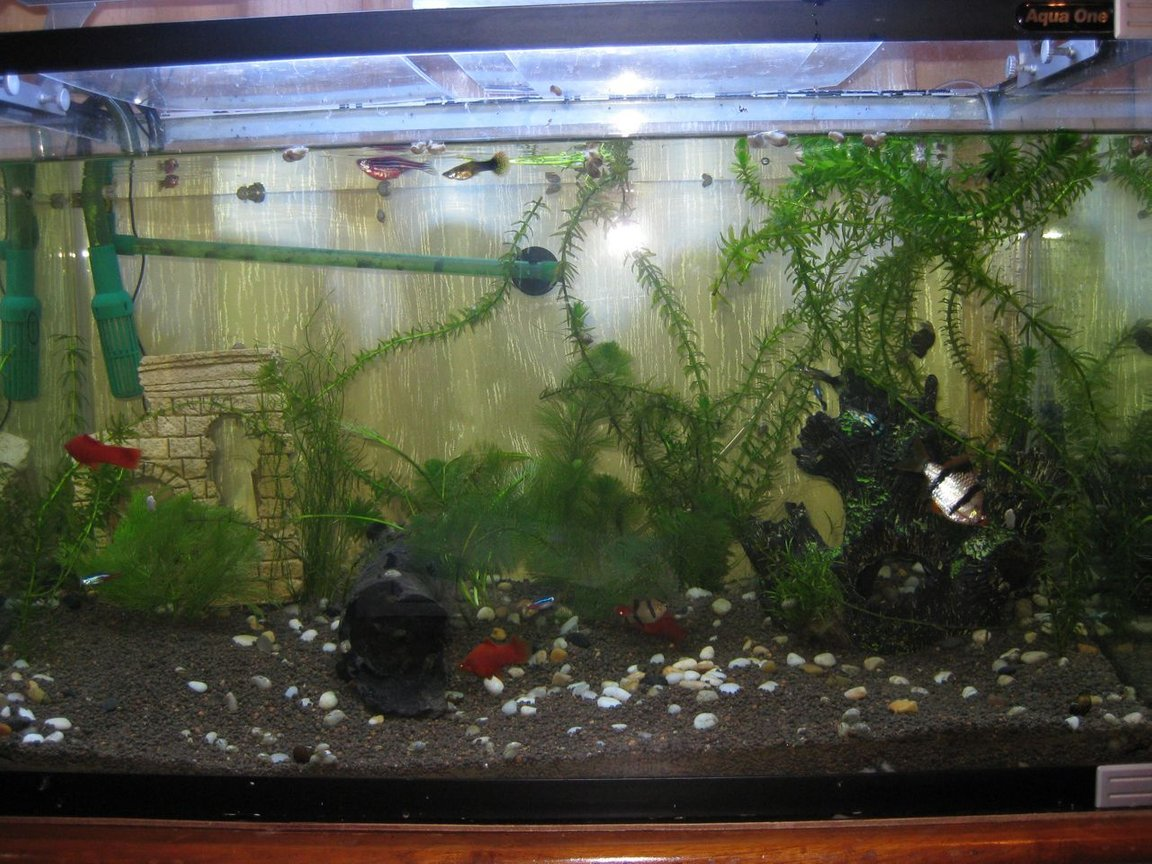 30 gallons freshwater fish tank (mostly fish and non-living decorations) - starting out