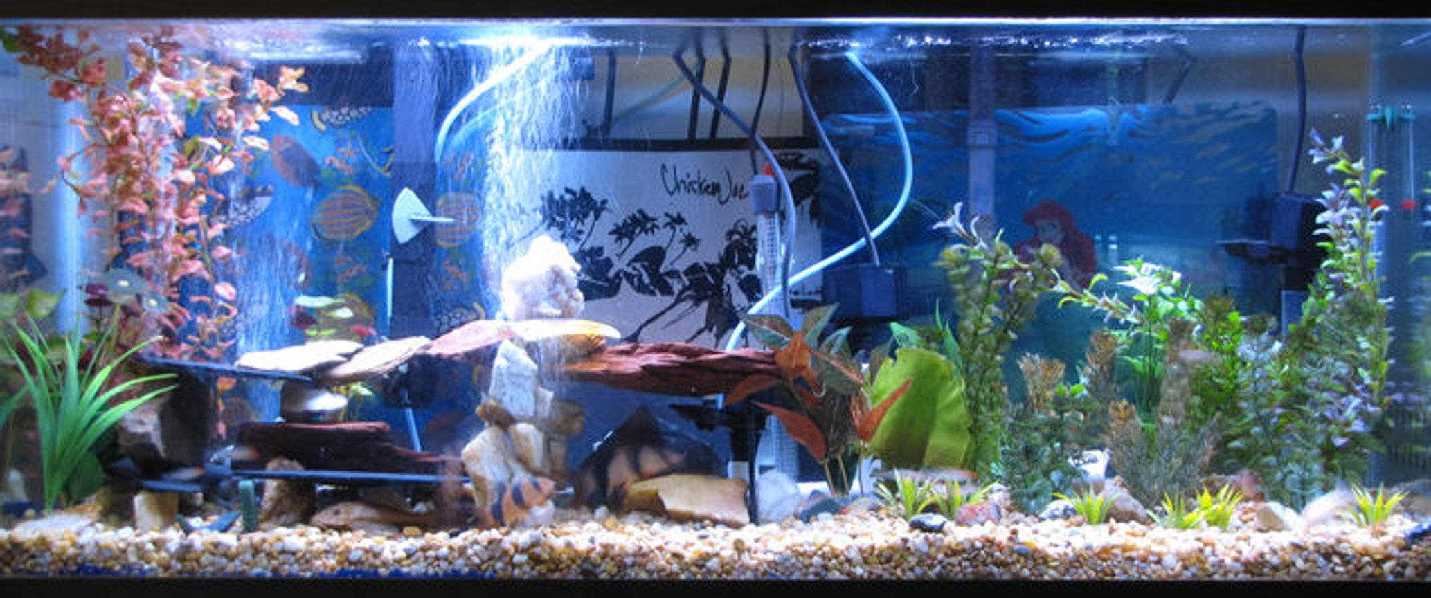 55 gallons freshwater fish tank (mostly fish and non-living decorations) - Here is my 55gal.