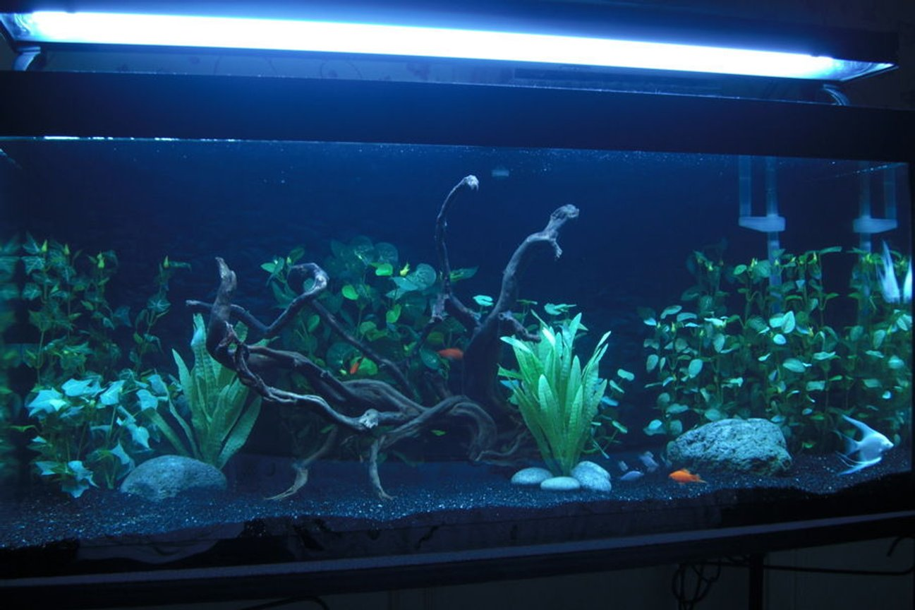 75 gallons freshwater fish tank (mostly fish and non-living decorations) - 75 gallon community