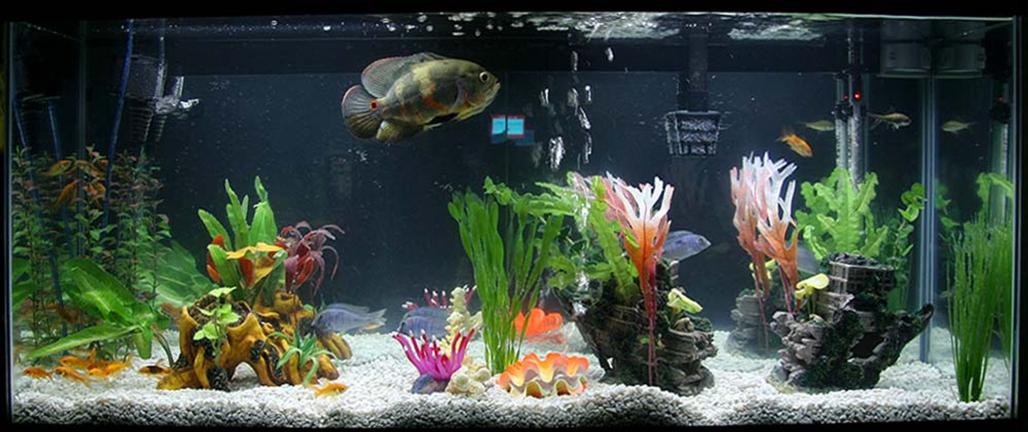 Photo #1 - Walmart 55 Gallon - A - A | RateMyFishTank com