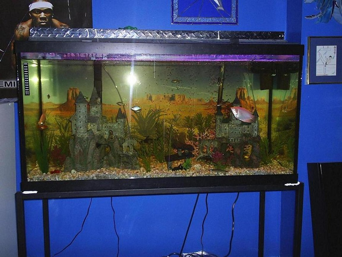 90 gallons freshwater fish tank (mostly fish and non-living decorations) - Front on view of my 90 Gallon tank.