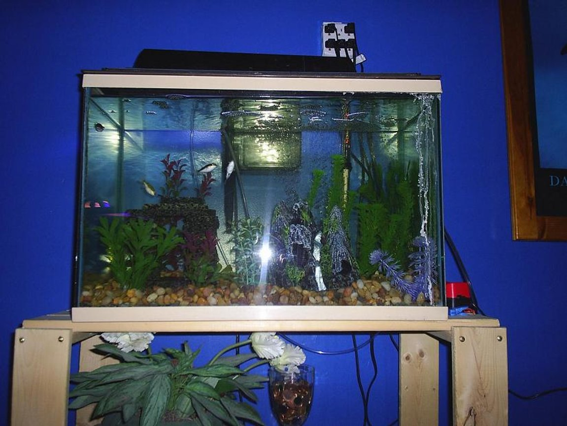 90 gallons freshwater fish tank (mostly fish and non-living decorations) - 20 Gallon Figure 8 Pufferfish. Species Only Tank. Aquaclear 200 Filter. Airstone as well in this tank.