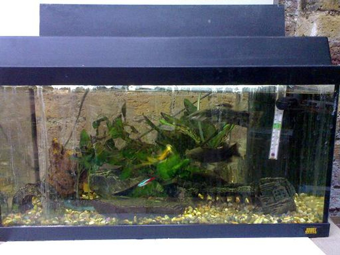 10 gallons freshwater fish tank (mostly fish and non-living decorations) - fish at work