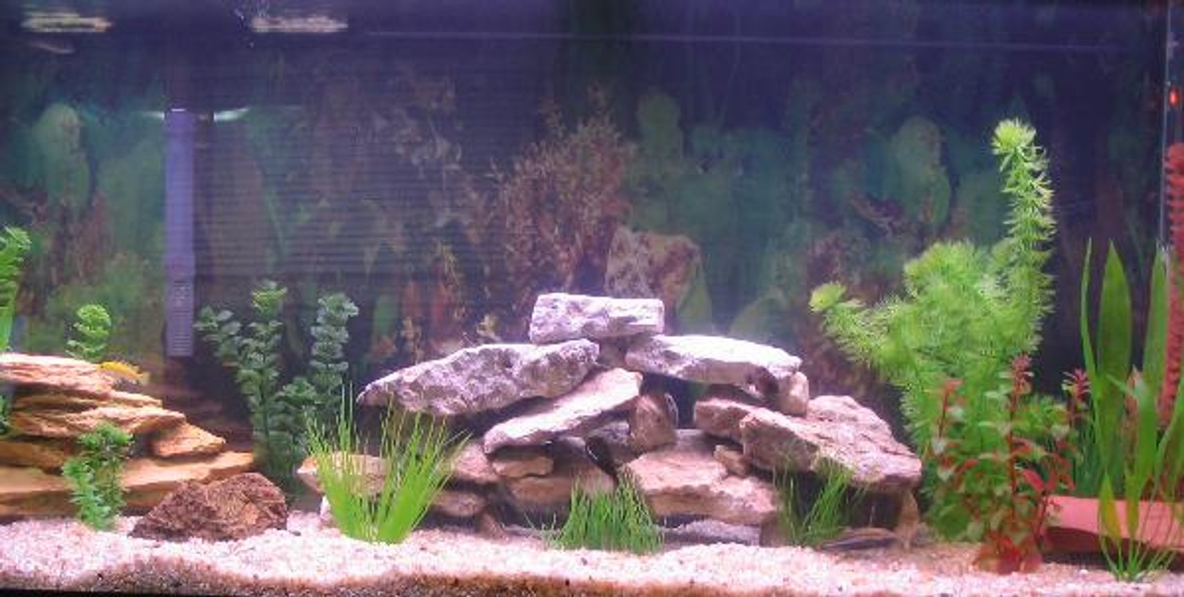 55 gallons freshwater fish tank (mostly fish and non-living decorations) - 55 Gal All Cichlids