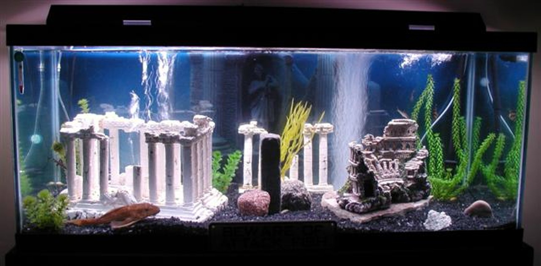 75 gallons freshwater fish tank (mostly fish and non-living decorations) - My Atlantis