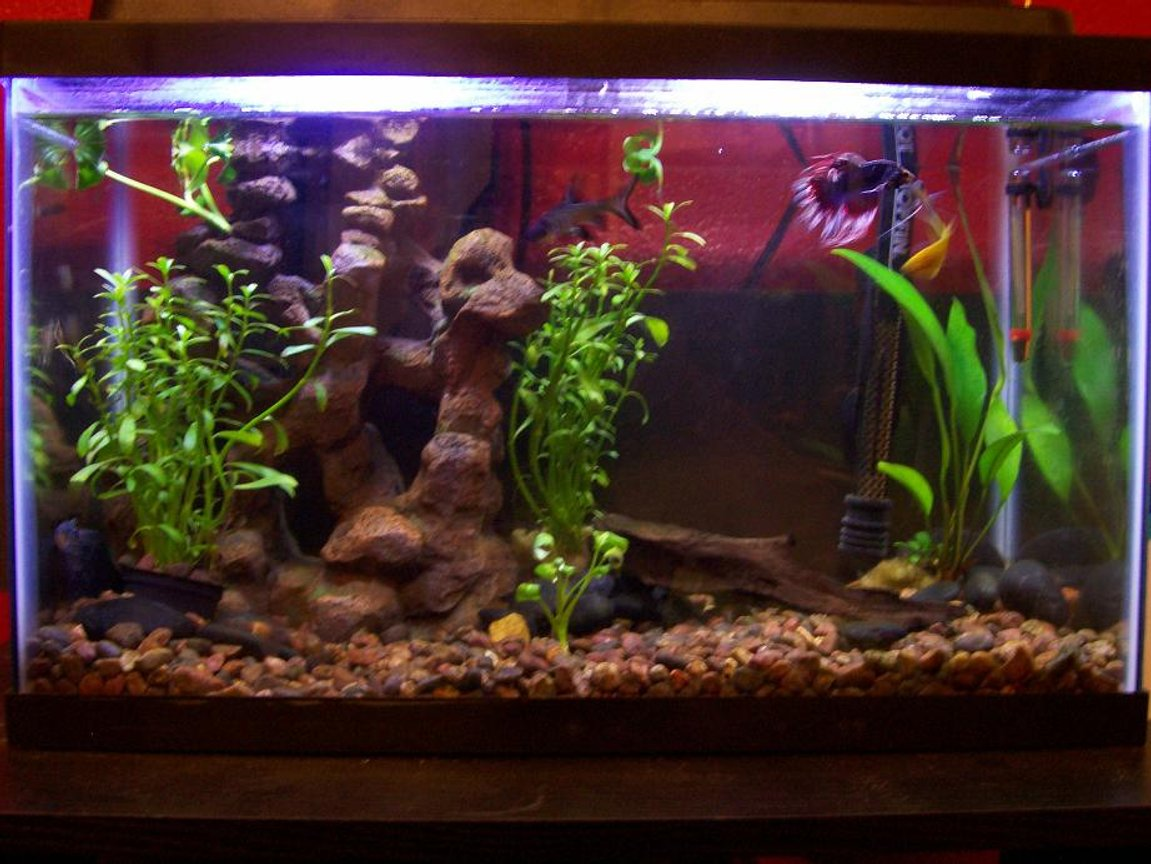 30 gallons freshwater fish tank (mostly fish and non-living decorations) - this is my 10 gall. I have 1yellow 1blue and 1pearl gorami 1 betta and a bala shark ( thats just a fancy name for a minnow) sounds good though. also 2 small unknown algea aeters. its a 10x10.5x20 10gal tank with a TOPFIN 10 filter and 50 watt heater with 5050 florecent light wich gives it a nice glow