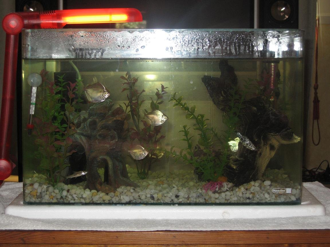 10 gallons freshwater fish tank (mostly fish and non-living decorations) - my new tank 6 silver dollars, 2 clown loaches and 2 silver sharks fake plants n driftwood
