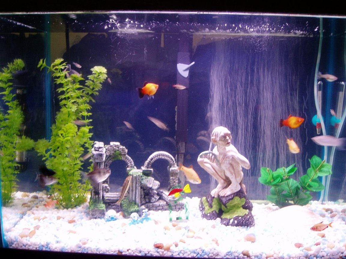 20 gallons freshwater fish tank (mostly fish and non-living decorations) - What do you think