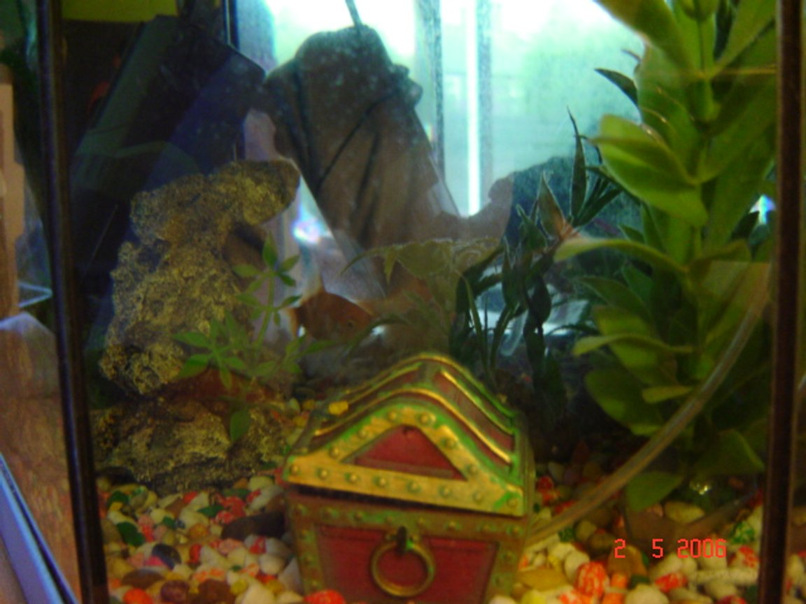 3 gallons freshwater fish tank (mostly fish and non-living decorations) - My small cold water fish tank