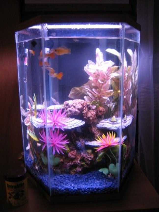 10 gallons freshwater fish tank (mostly fish and non-living decorations) - mollies and guppies and babies, oh my!