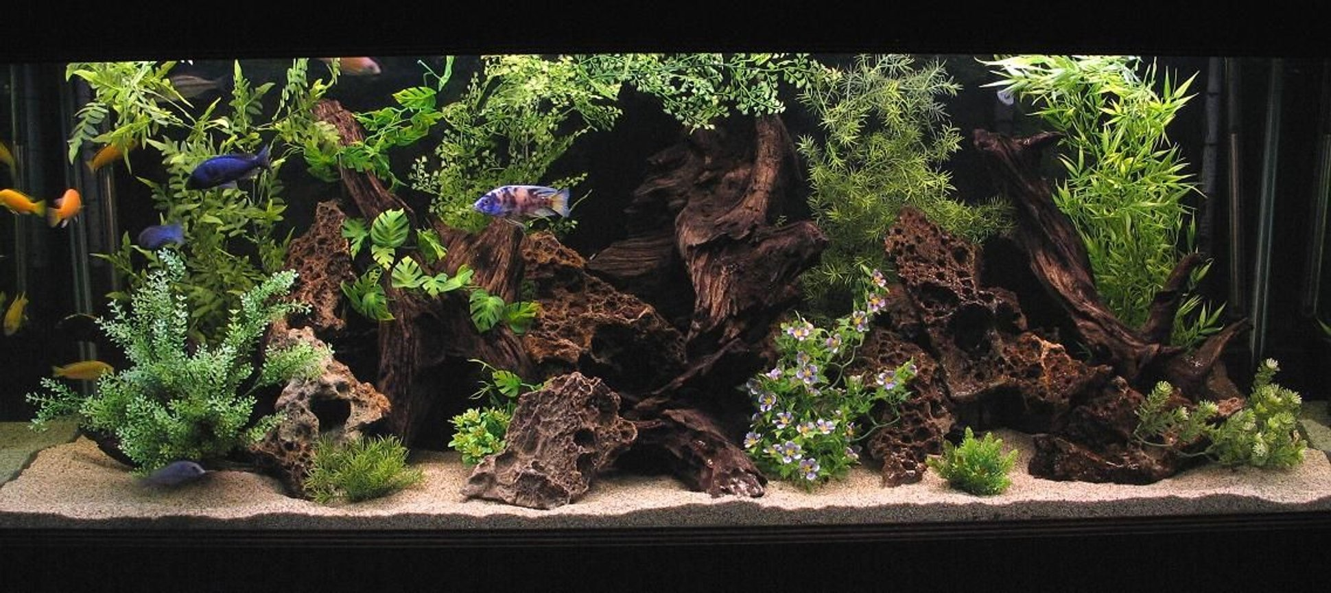 180 gallons freshwater fish tank (mostly fish and non-living decorations) - 180 Gallon Show Tank.
