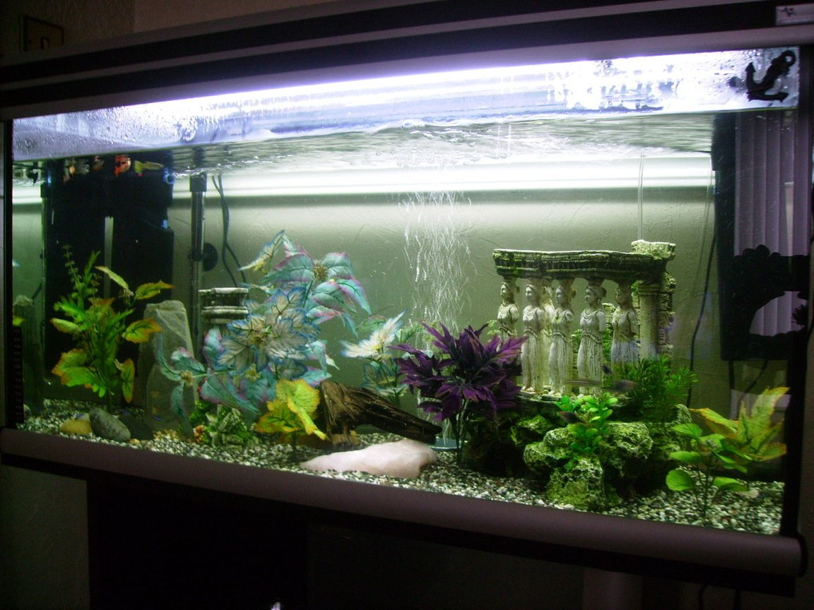 20 gallons freshwater fish tank (mostly fish and non-living decorations) - my new tank