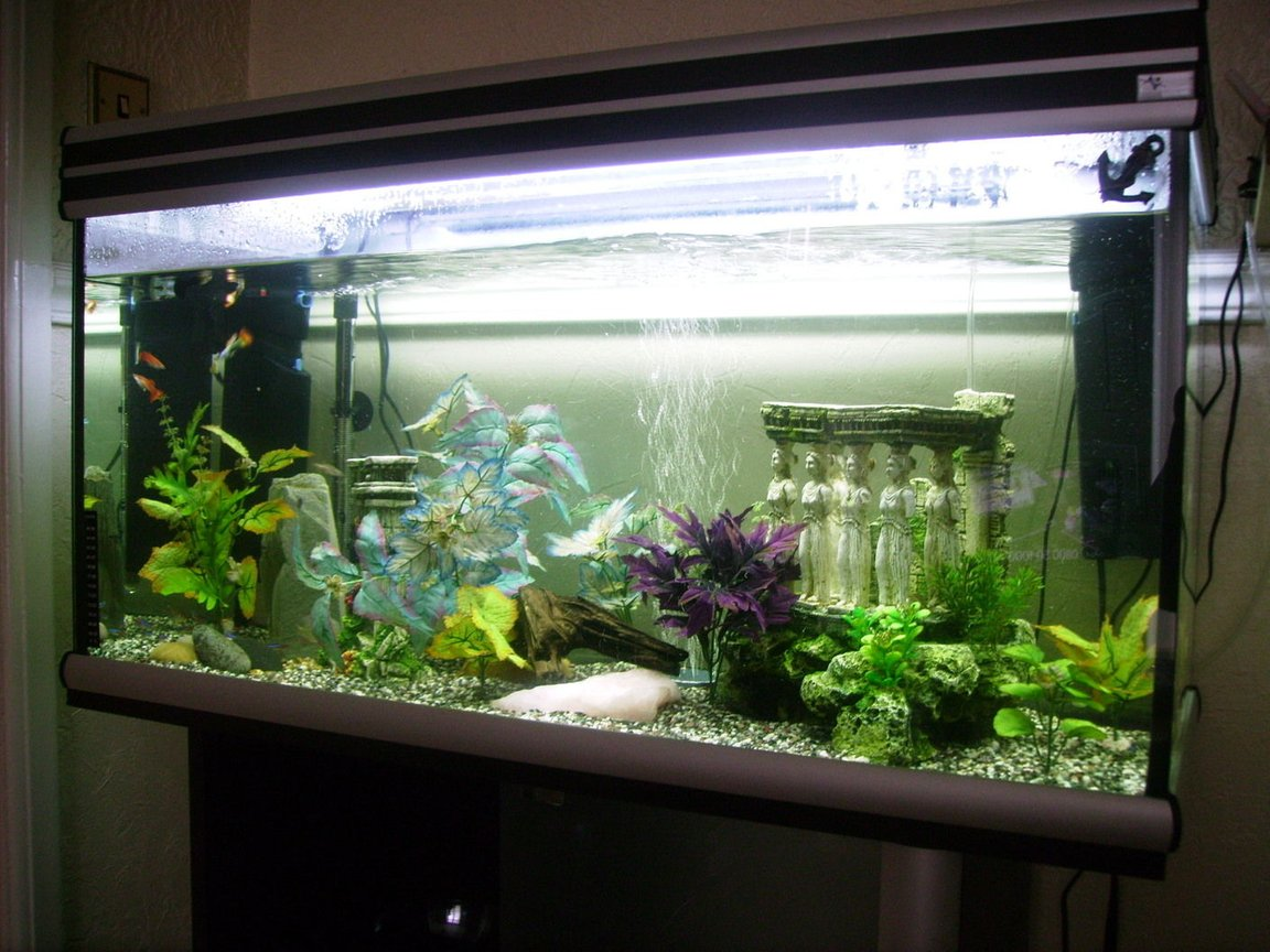 20 gallons freshwater fish tank (mostly fish and non-living decorations) - pic 2