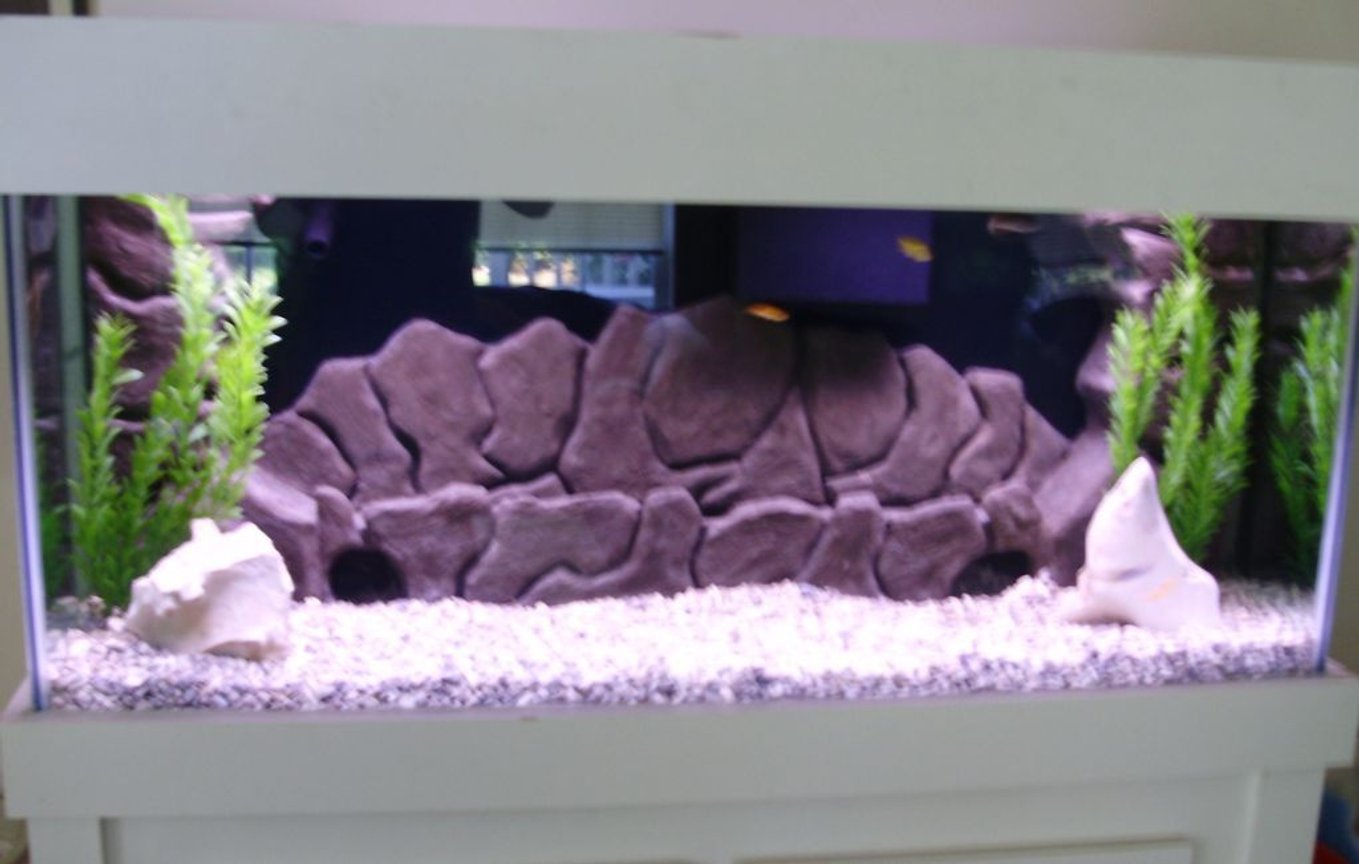 75 gallons freshwater fish tank (mostly fish and non-living decorations) - full view