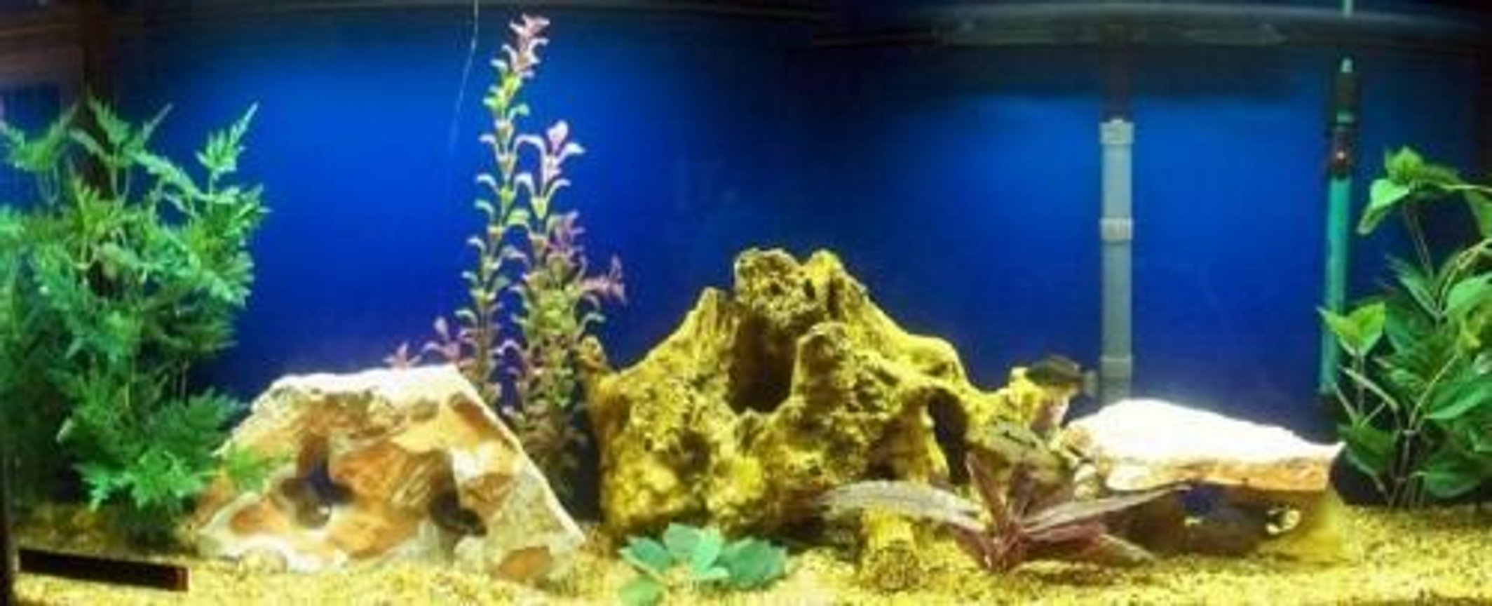 55 gallons freshwater fish tank (mostly fish and non-living decorations) - My new 55 gallon African Cichlid tank.