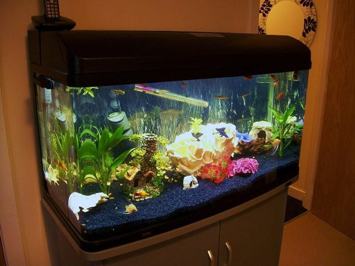 50 gallons freshwater fish tank (mostly fish and non-living decorations) - 215 litre community tank with artificial coral,plants and real rock :)
