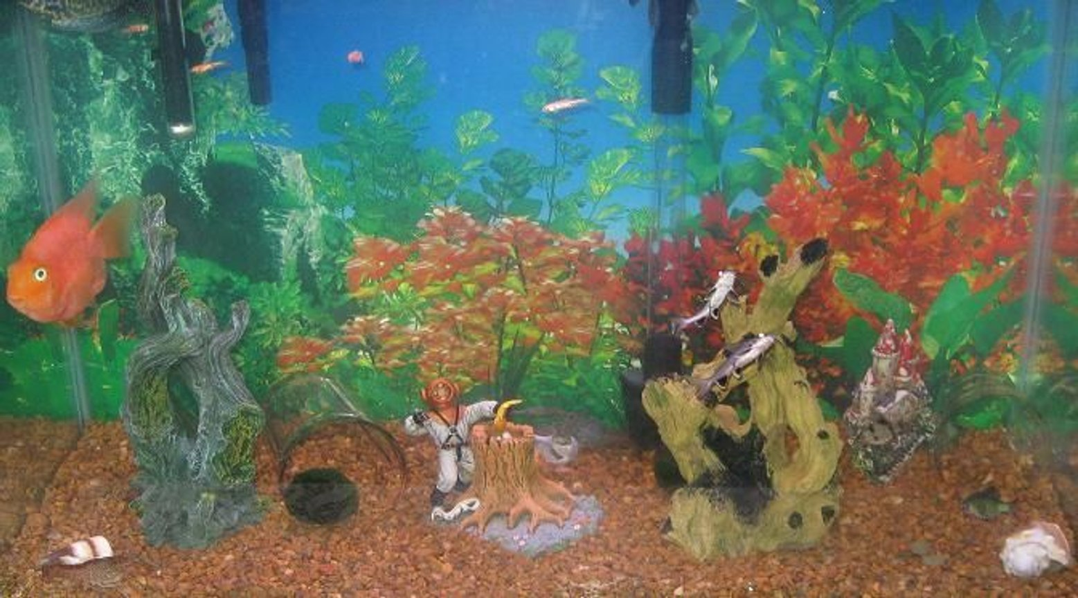29 gallons freshwater fish tank (mostly fish and non-living decorations) - My 3 children made this tank . They are 7M 5F 4M . This is there first tank