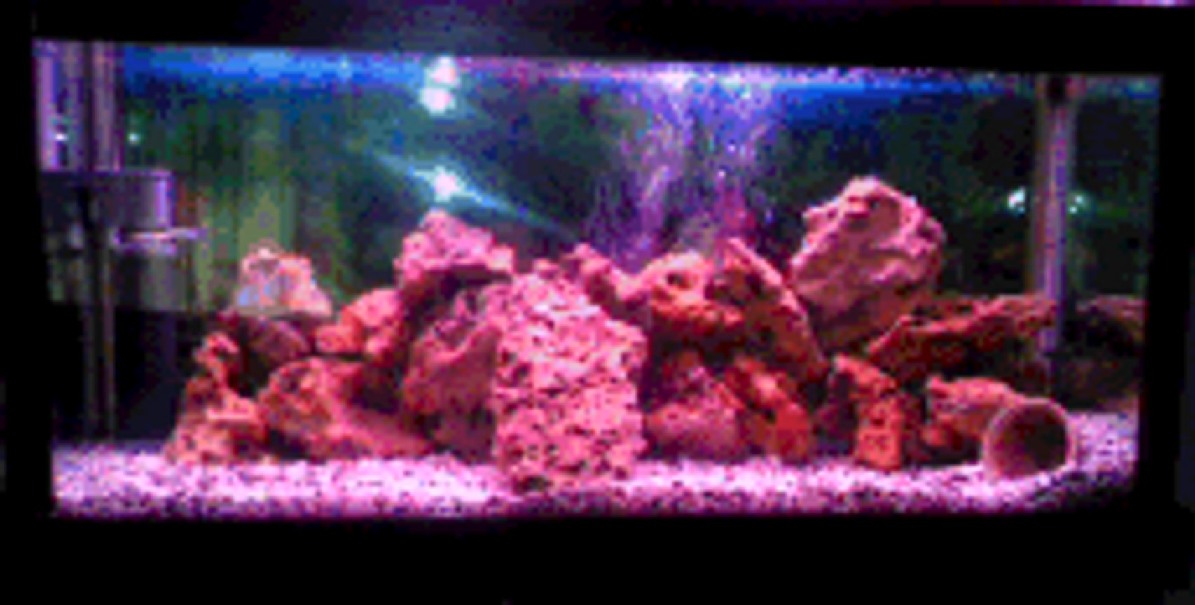 84 gallons freshwater fish tank (mostly fish and non-living decorations) - 4 ft long, 2 1/2 ft wide and 20 cm high. only rock work and one pink light. many caves and hiding places for the fish. 1 male and 1 female green terrors which have spawned 4 times with 500 eggs each time.