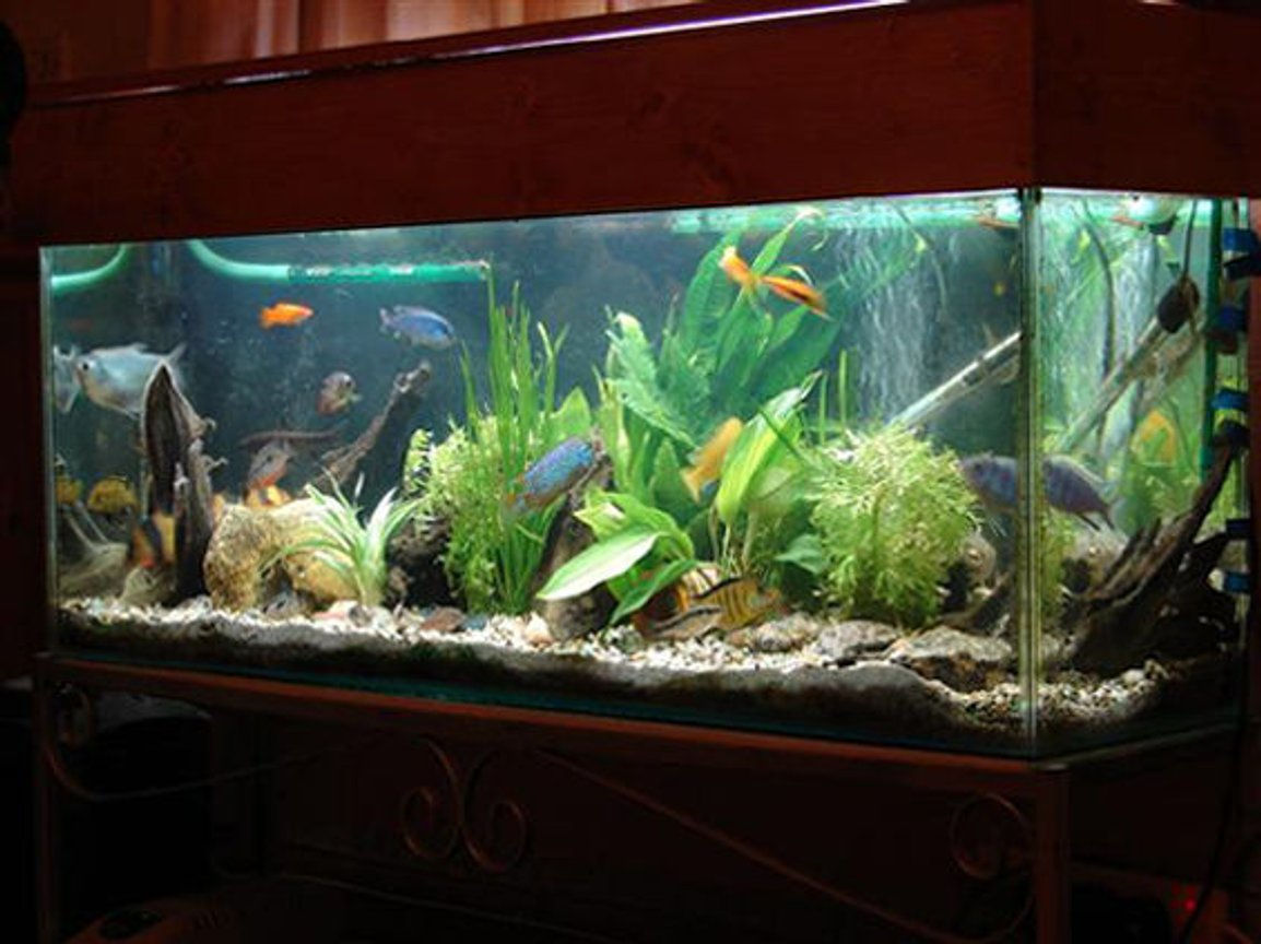10 gallons freshwater fish tank (mostly fish and non-living decorations) - my tank is awesome