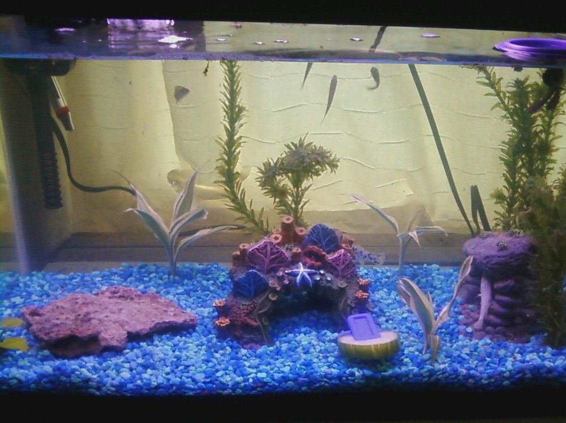 10 gallons freshwater fish tank (mostly fish and non-living decorations) - This is my 10g aquarium.