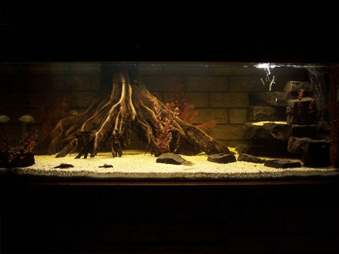 110 gallons freshwater fish tank (mostly fish and non-living decorations) - Mangrove Jack tank. Other fish in there, for the moment.