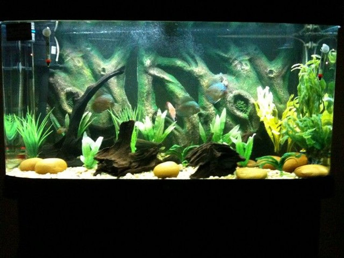 55 gallons freshwater fish tank (mostly fish and non-living decorations) - discus habitat