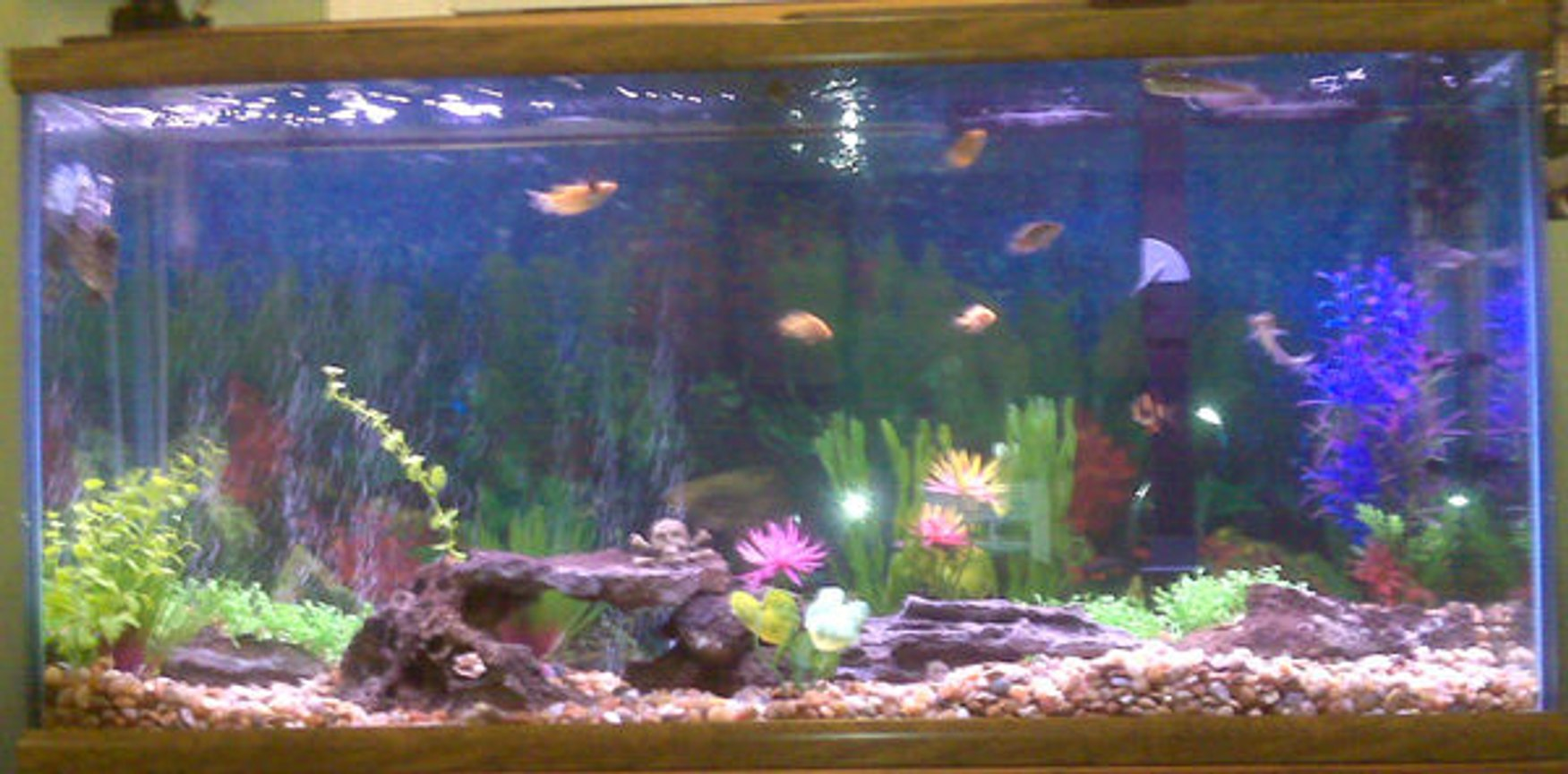 55 gallons freshwater fish tank (mostly fish and non-living decorations) - always adding not done yet