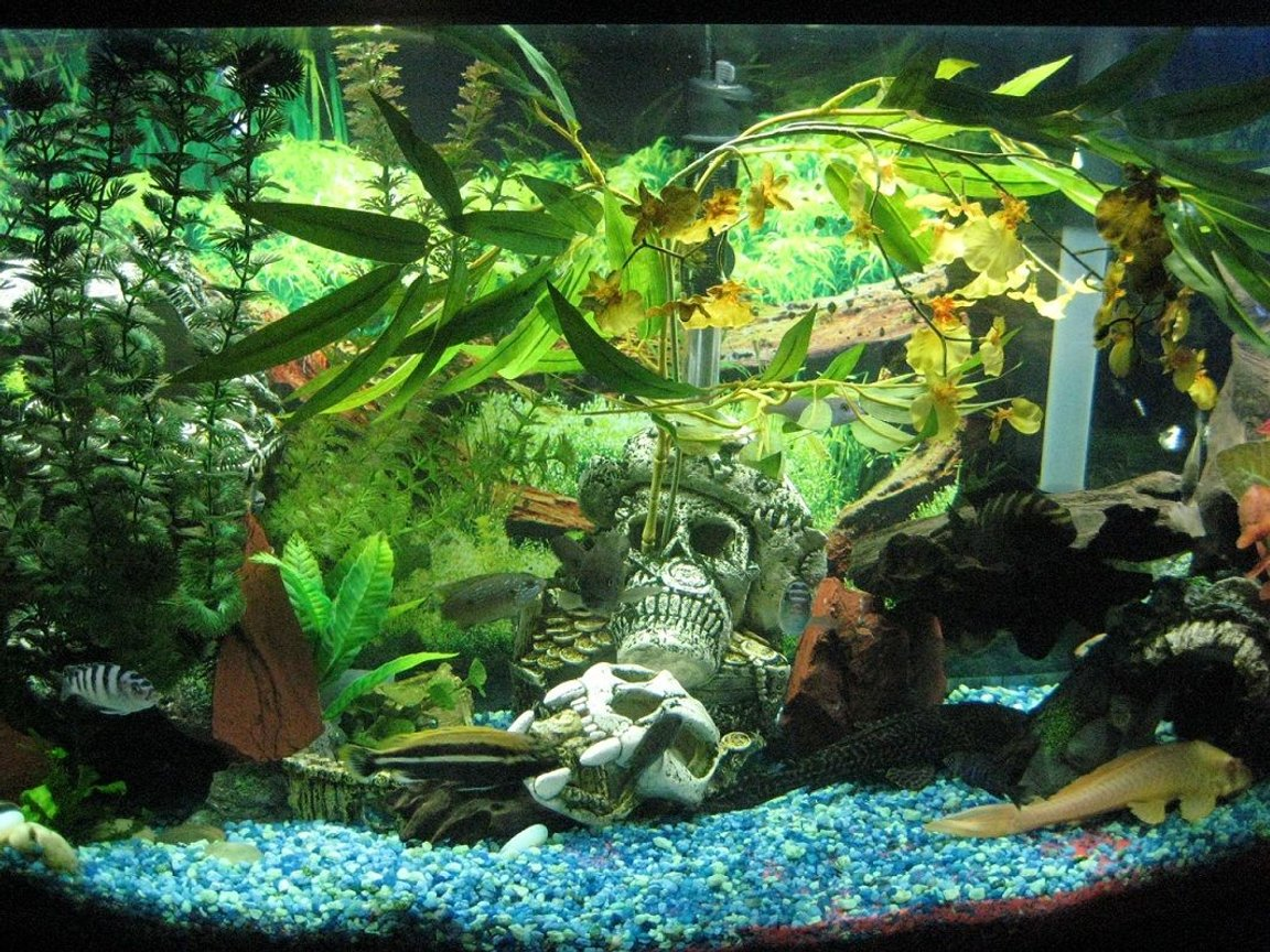 55 gallons freshwater fish tank (mostly fish and non-living decorations) - My Eco :P