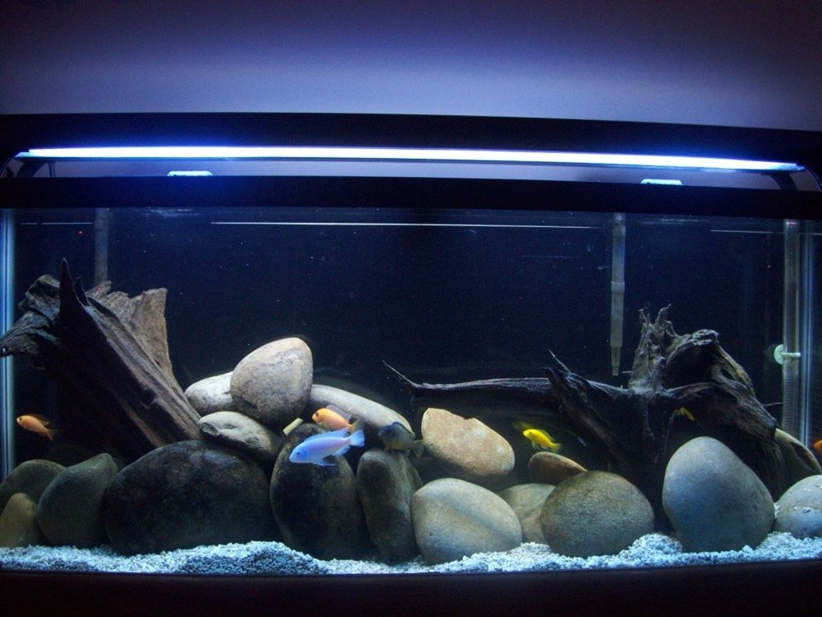 55 gallons freshwater fish tank (mostly fish and non-living decorations) - Lake Malawi Tank