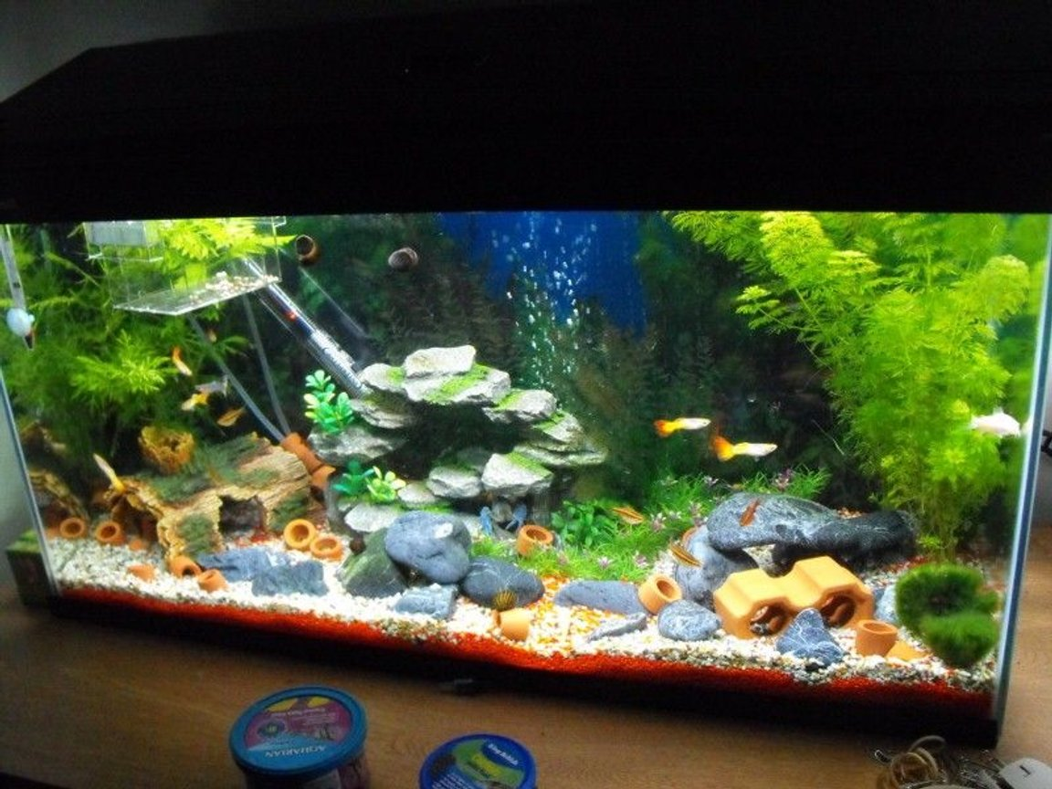 22 gallons freshwater fish tank (mostly fish and non-living decorations) - the gravels removed from under most rocks to form caves, theres even a network of 2 tunnels that are used by the shrimp