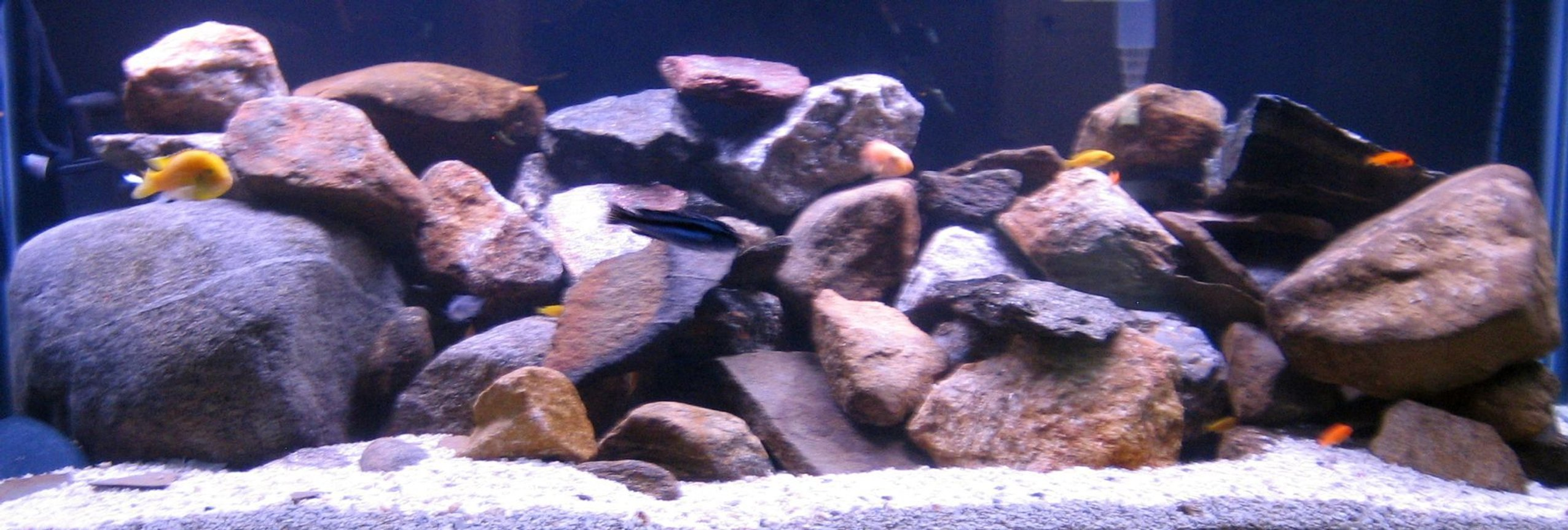 75 gallons freshwater fish tank (mostly fish and non-living decorations) - Malawi 75 Gallon