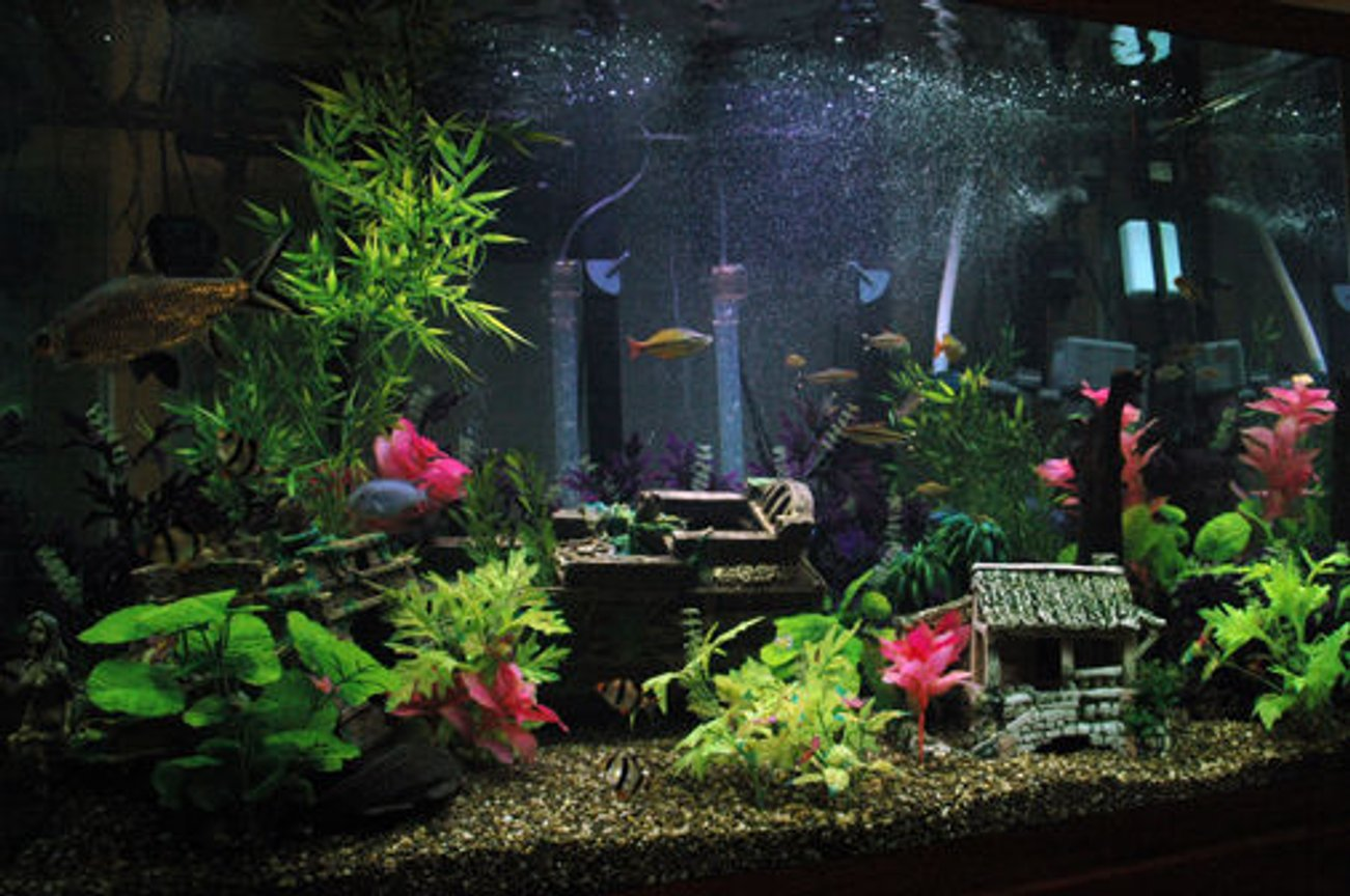 120 gallons freshwater fish tank (mostly fish and non-living decorations) - 120g Tank