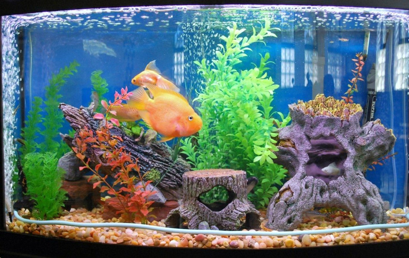 46 gallons freshwater fish tank (mostly fish and non-living decorations) - 46 Tank