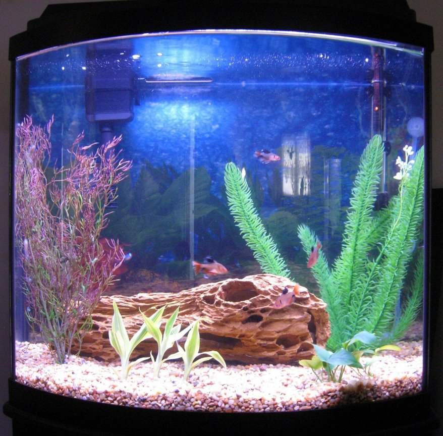 16 gallons freshwater fish tank (mostly fish and non-living decorations) - 16 gallon bow