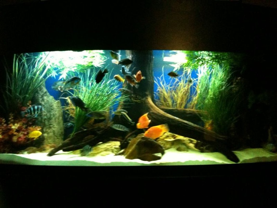 175 gallons freshwater fish tank (mostly fish and non-living decorations) - updated 175 gallon bowfront. march 22, 2010