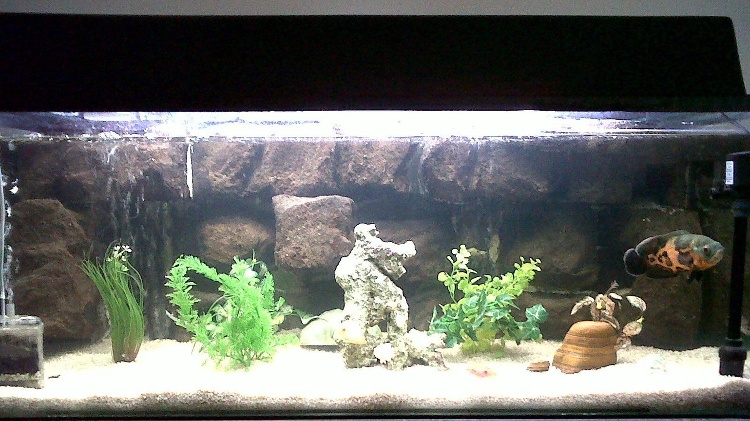 60 gallons freshwater fish tank (mostly fish and non-living decorations) - Tropical fish tank