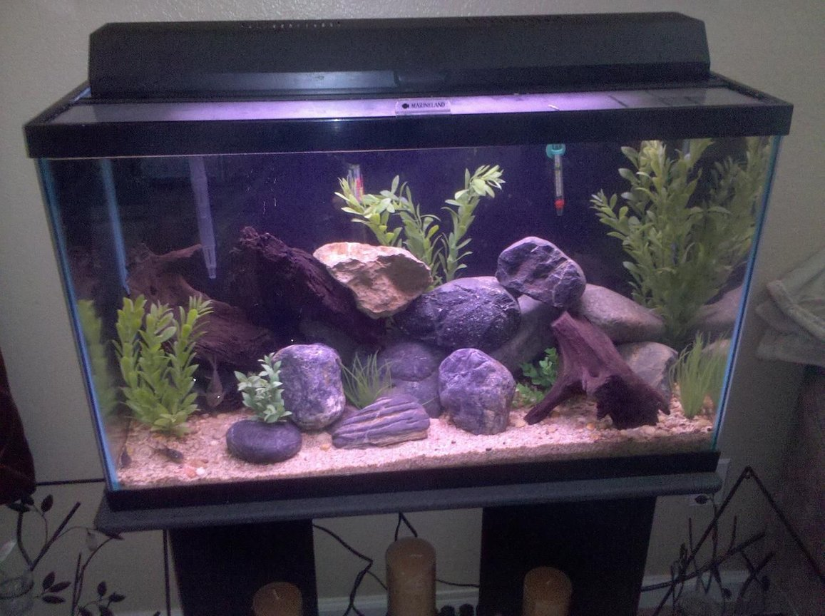 29 gallons freshwater fish tank (mostly fish and non-living decorations) - 29 Gal FW tank.