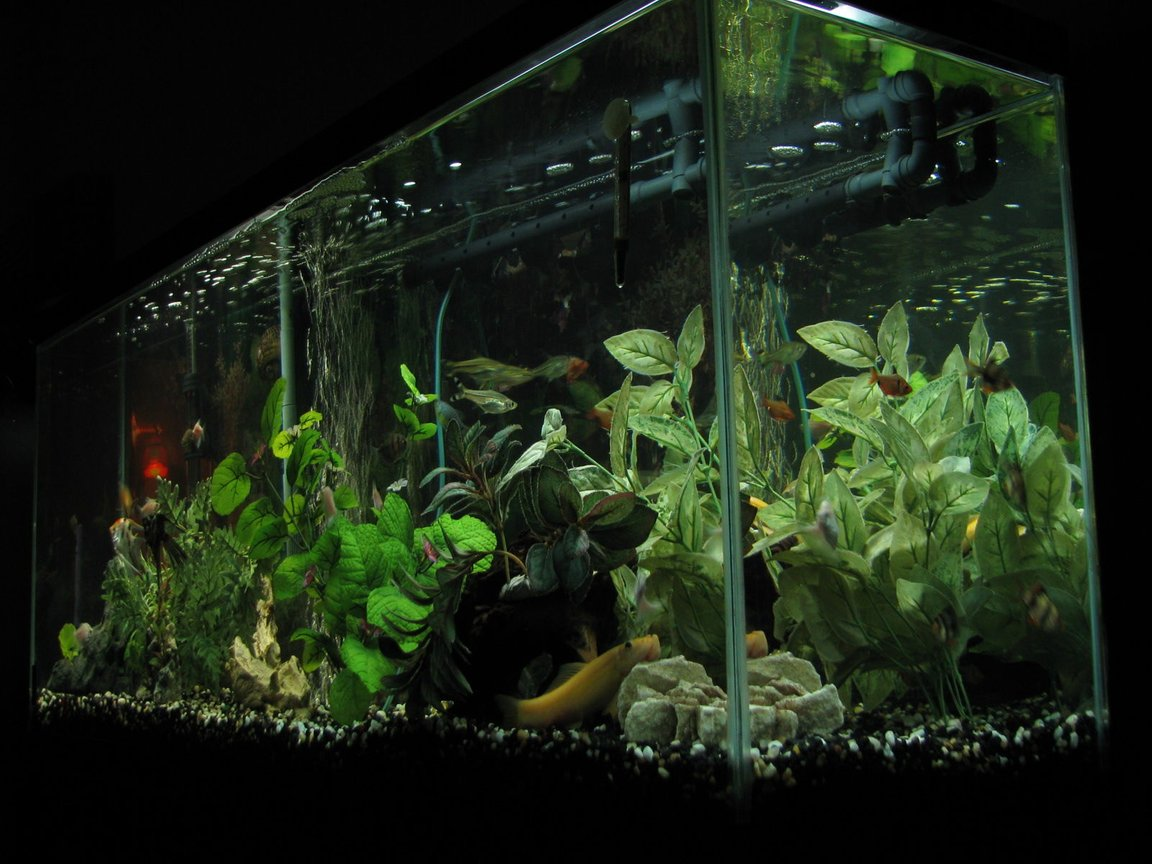 55 gallons freshwater fish tank (mostly fish and non-living decorations) - One of our 3 tanks