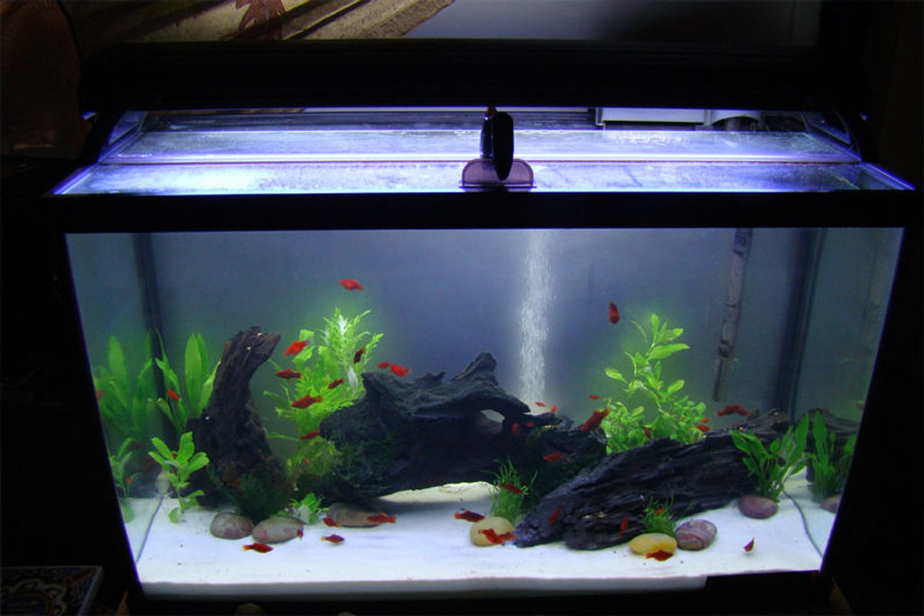 29 gallons freshwater fish tank (mostly fish and non-living decorations) - My new 29 Gallon Tank May 2010