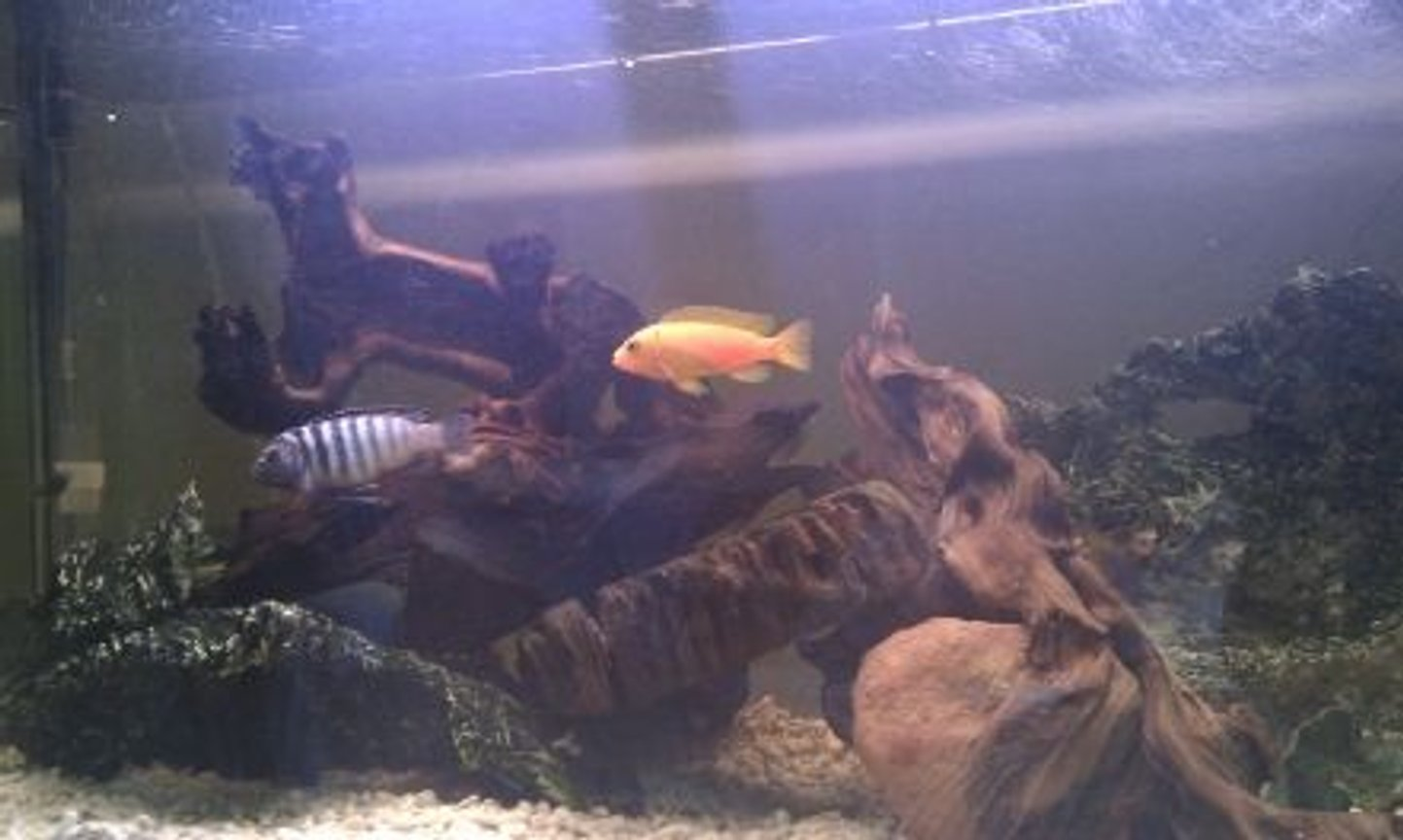 53 gallons freshwater fish tank (mostly fish and non-living decorations) - Latest