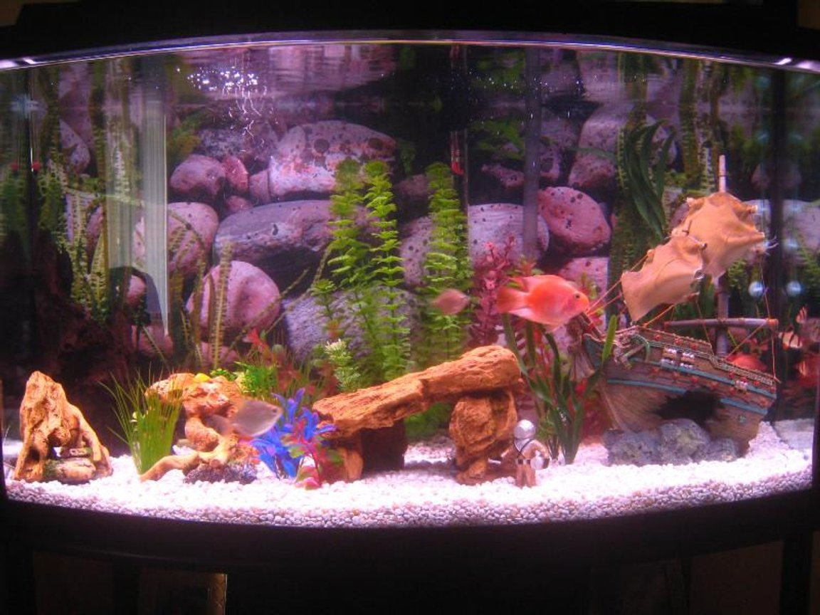46 gallons freshwater fish tank (mostly fish and non-living decorations) - 46 Gallon Bow Front Freshwater Tank