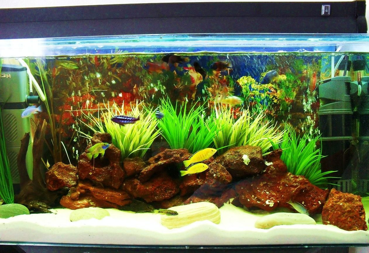 20 gallons freshwater fish tank (mostly fish and non-living decorations) - under construction 2