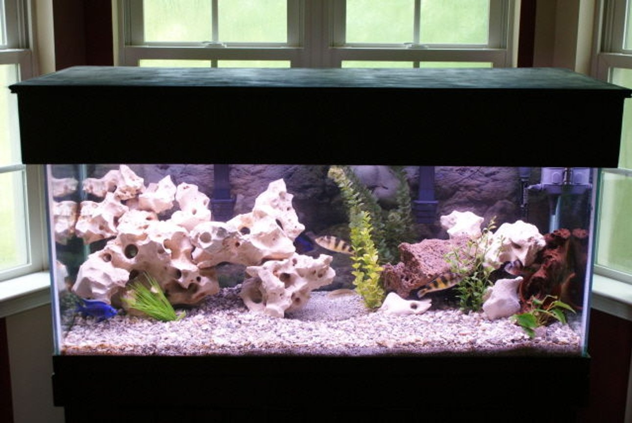 75 gallons freshwater fish tank (mostly fish and non-living decorations) - 75 gallon mixed African tank