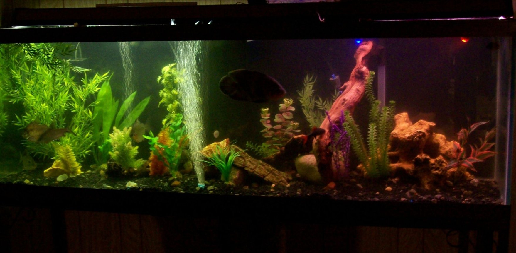 "55 gallons freshwater fish tank (mostly fish and non-living decorations) - magnum 350 and Ehiem ecco canister filters. My lighting is either made up of 5 Submersible LED lights 2 green, 2 blue, and one red in the volcano. Or two 20"" double bulb plant/aquarium light w/ or w/o already mentioned submerged LEDs."