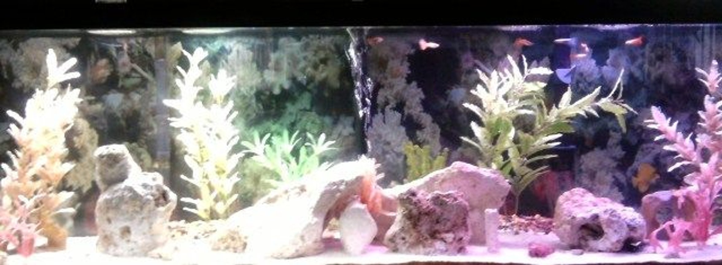 125 gallons freshwater fish tank (mostly fish and non-living decorations) - Whole 125gallons of Tank