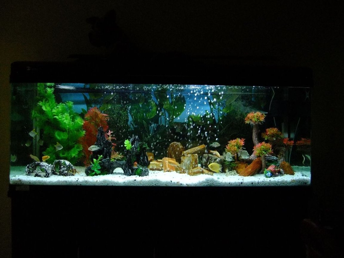 100 gallons freshwater fish tank (mostly fish and non-living decorations) - This is a picture of my 100G / 5 Feet Fresh Water tank. The aquarium is made of acrylic and is home to some fine Cichlids. There are 21 fishes in total.