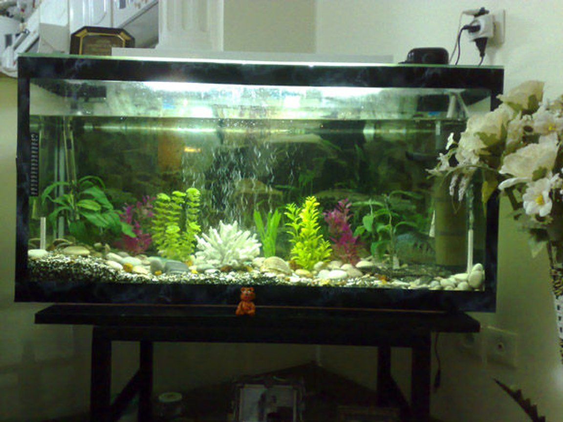 40 gallons freshwater fish tank (mostly fish and non-living decorations) - uuuuu